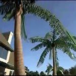 ساخت نخل مصنوعی  artificial palm