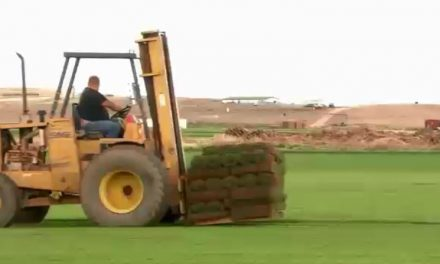 تولید چمن Turf Grass