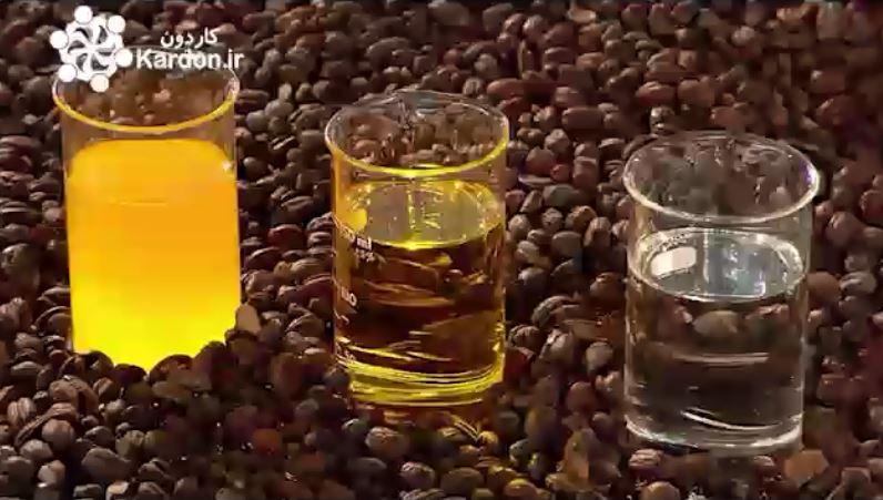 تولید روغن جوجوبا Jojoba Oil