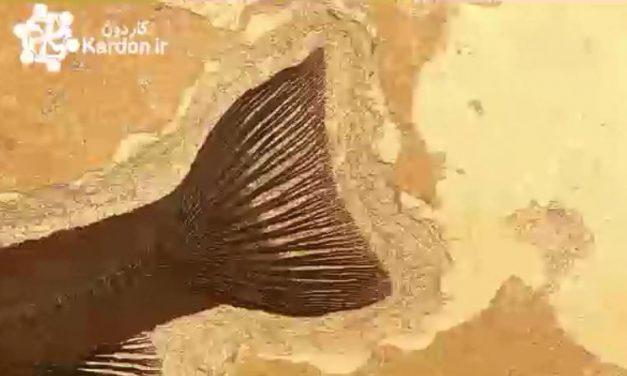 فسیل Fossils