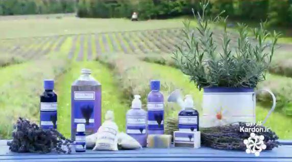 تولید عطر سنبل Lavender Essential Oil