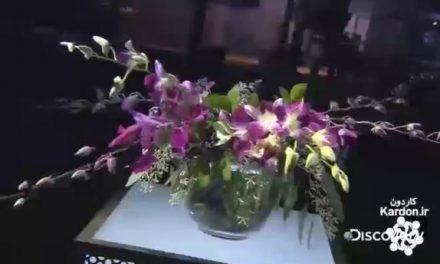 تولید گل ارکیده Orchids